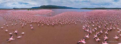 Flamingo, Lake Bogoria, Kenya, People, Woman, Travel, Adventure, Trek, Mountain, Rock